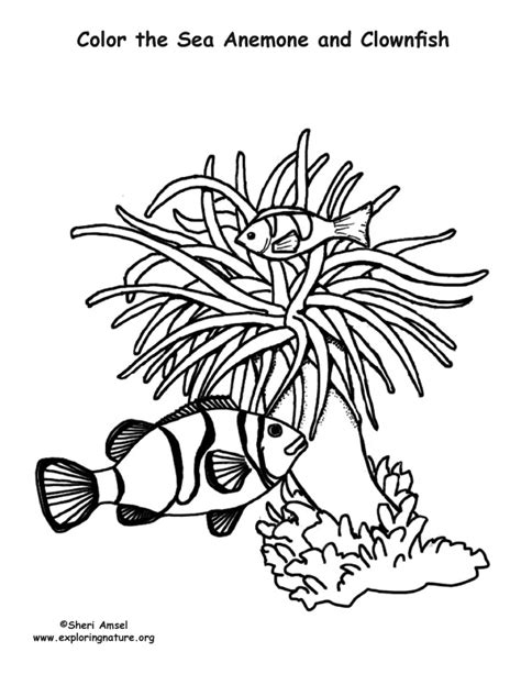 sea anemone and clownfish coloring nature