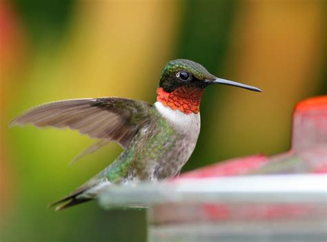top 10 things you can do to attract hummingbirds 187 bird