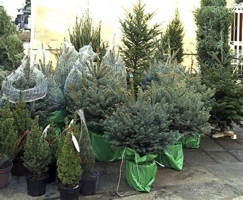 so geht s den wirklich perfekten weihnachtsbaum finden