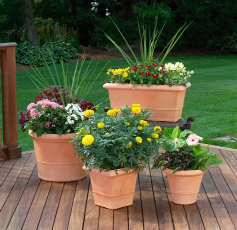 Planter Ideas Sun by 35 Patio Potted Plant And Flower Ideas Creative And