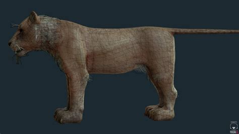 film lioness 3d model lioness for games and film vr ar low poly obj