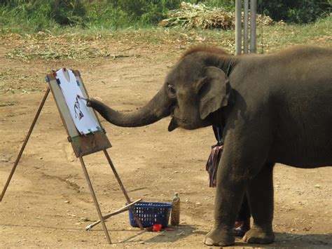 painting elephant elephants encounters at chiang mai in thailand