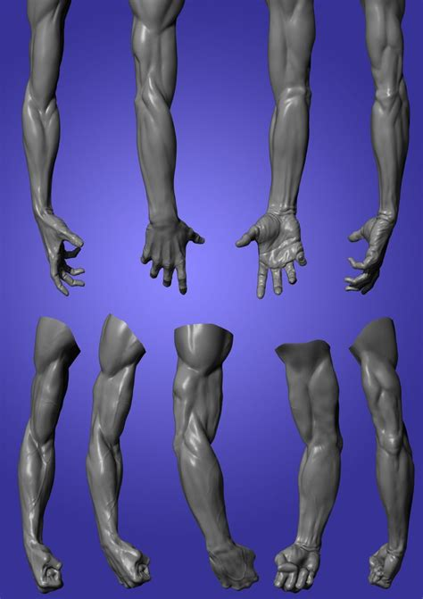 zbrush arm tutorial 249 best art anatomy arms hands images on pinterest