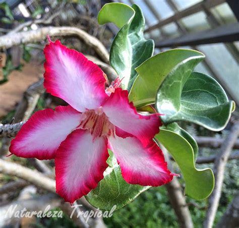 espectaculares imagenes de las flores mas lindas del mundo fotos de flores hermosas y raras