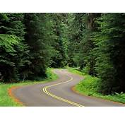 Nature Landscape Trees Forest Grass Road Twist