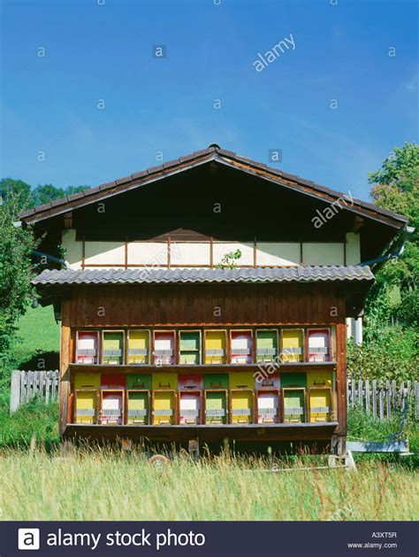 buy bee house zoology animals insects bee bee house beekeeping austria bee stock photo