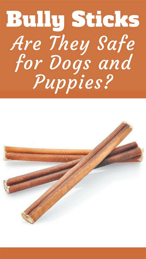 are bully sticks safe for dogs what is a bully stick what are they made of are they safe