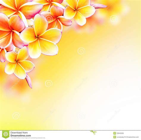 border design flower yellow flower border stock photos 83 655 flower border stock