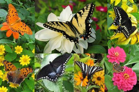 How To Make A Butterfly Garden by Butterfly Garden 187 The Garden Butterfly