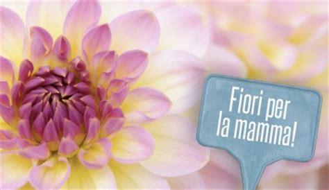 fiore per la mamma fiori per la festa della mamma 10 fiori da regalare leitv