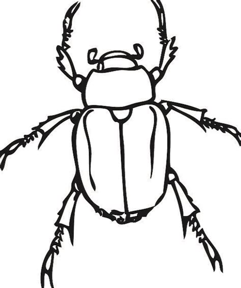 june bug drawing
