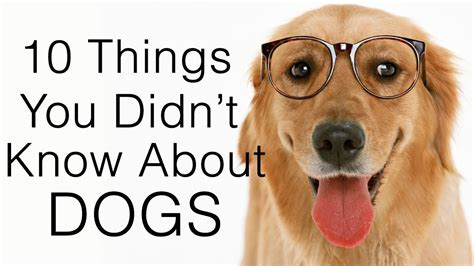 10 Facts About Dogs by Facts Lists