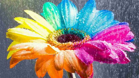 wallpaper flower colorful 25 free hd flowers wallpapers