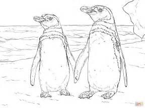 galapagos penguin coloring page galapagos penguin coloring page coloring pages
