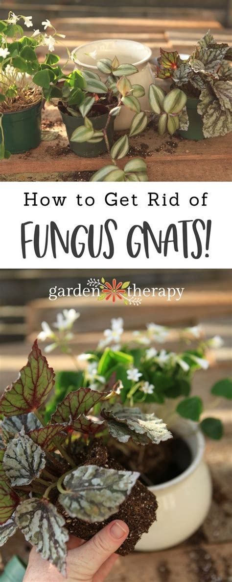 garden therapy images  pinterest gardening