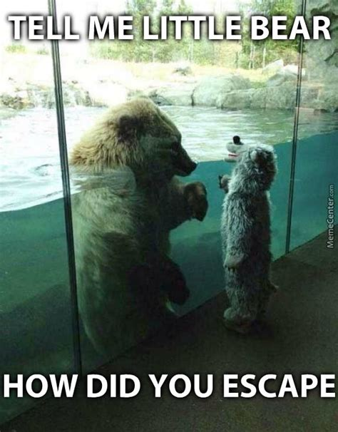 Funny Bear Meme - i see humans coming run little bear and don t forget to