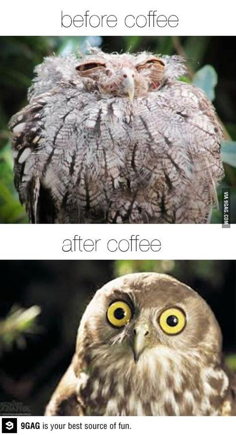 Funny Owl Memes - 48 best cute owl memes images on pinterest owls funny