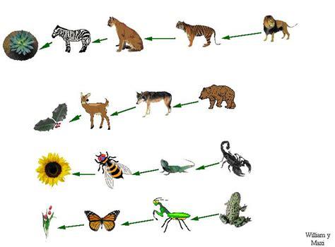 cadenas troficas clasificacion cadenas troficas
