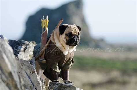 lord pug lord of the rings pugs