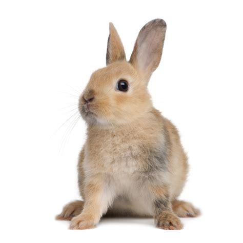 le hase dessin en couleurs 224 imprimer animaux lapin num 233 ro 300682