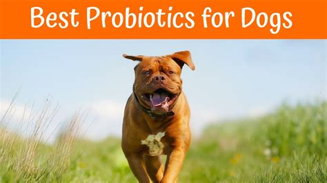 best probiotic for dogs best probiotics for dogs buying guide in 2017 us bones