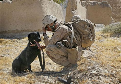 combat dogs memorial day tribute to war dogs thedogtrainingsecret