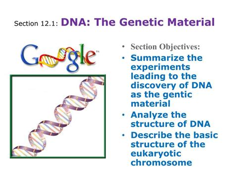 chapter 12 section 1 dna the genetic material ppt chapter 12 molecular genetics powerpoint