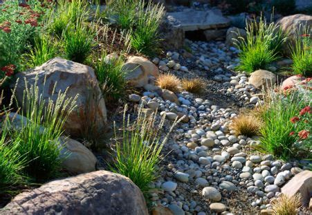 17 best images about gardens indigenous on pinterest gardens stream bed and outdoor buildings