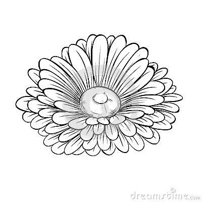 aster flower tattoo designs 1evgeniya1 uploads page 3 coloring pages