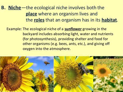 exle of niche ecology