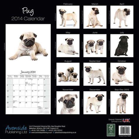 pug calendars pug calendar 2015 30469 15 pug breeds