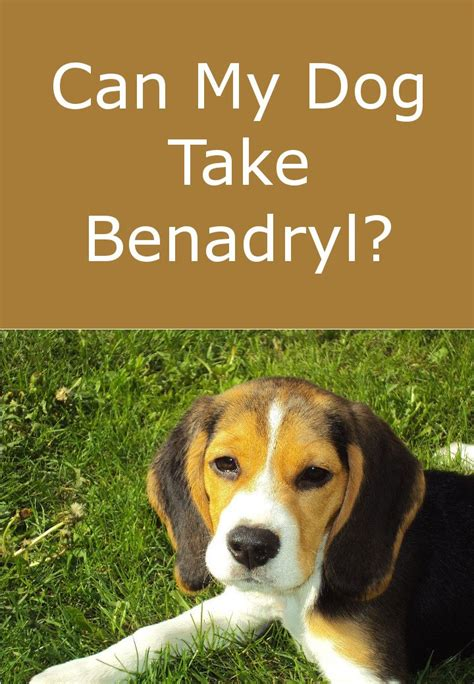 can dogs benadryl is benadryl safe for my