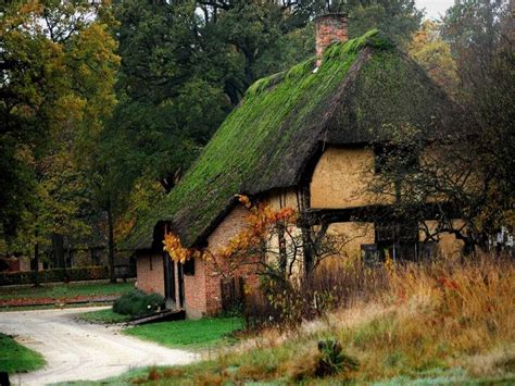 beautiful cottages pictures cottage surrounded beautiful ancient redwoods hd