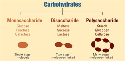 carbohydrates definition and importance carbohydrates sources and importance