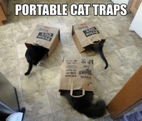 Cat Trap Meme - lol cats 17 pics