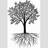 Family Tree Roots Background   695 x 1024 png 217kB