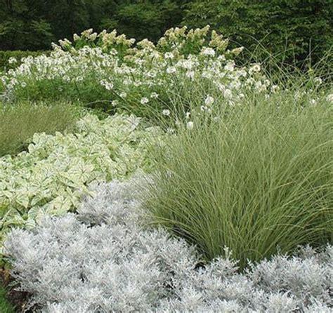 white and silver flowers more moon garden ideas gardens