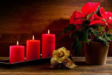 imagenes de navidad flores banco de im 193 genes 20 im 225 genes de nochebuenas flores de