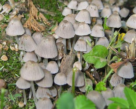 Pilze Im Garten Bilder by Pilze Im Garten Pic