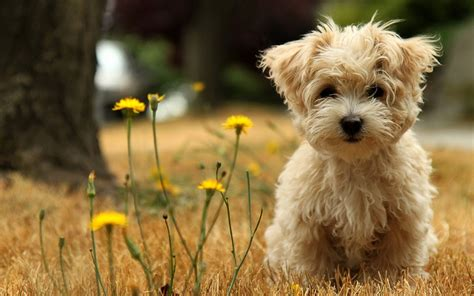 puppy with flowers puppy with flowers wallpaper 36146
