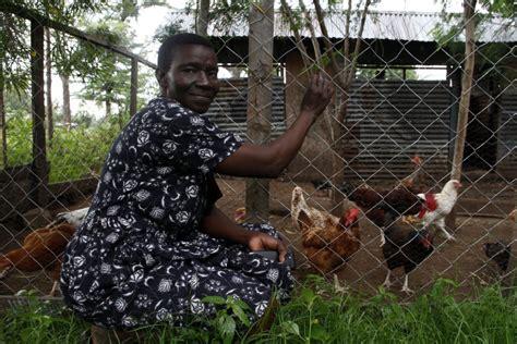 backyard poultry rearing vaccines boost backyard poultry rearing in western kenya
