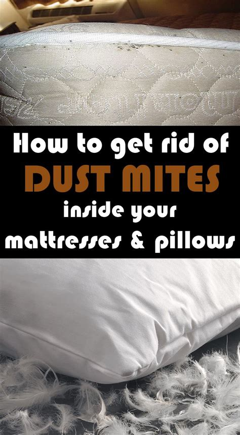 How To Get Rid Of Mattresses by 25 Best Ideas About Dust Mites On Keep