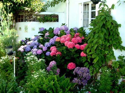 hydrangea color change garden