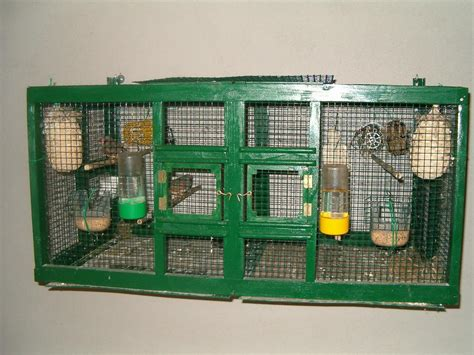 la gabbia forum scelta della gabbia e degli accessori pagina 3