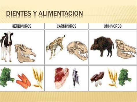 imagenes de animales por su alimentacion alimentacion animales y plantas