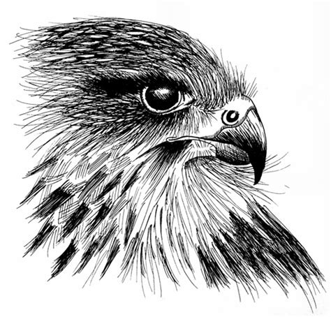 Tumbleweed Home ink drawings kimberly andrews