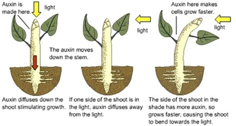 tropic movements in plants movement in plants 10th biology lesson 14 3 part 1