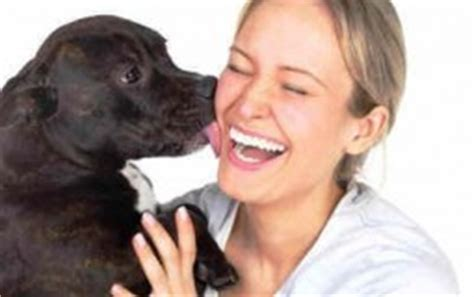 why do dogs faces why do dogs their humans faces all about and for dogs