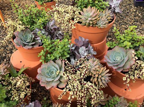 dawsons succulent bowl mm pot dawsons garden world