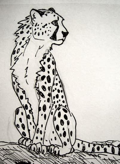 sketchbook cheetah cheetah sketch by deception betrayed deviantart on
